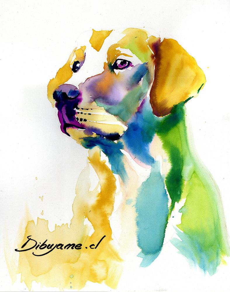 dibujo acuarela perro